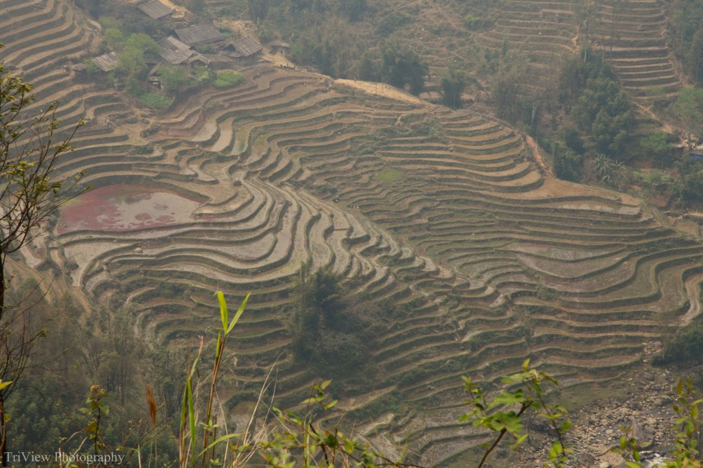 rice-fields-sapa-2
