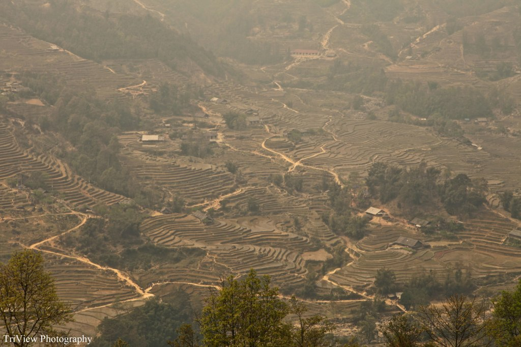 Rice-fields-sapa