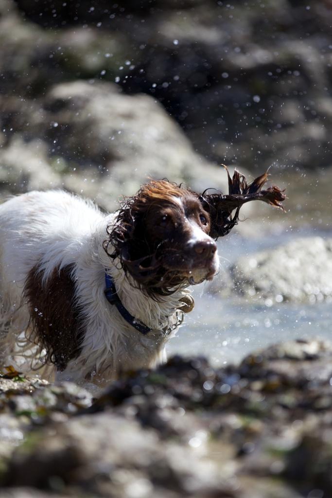 Dog photography shake