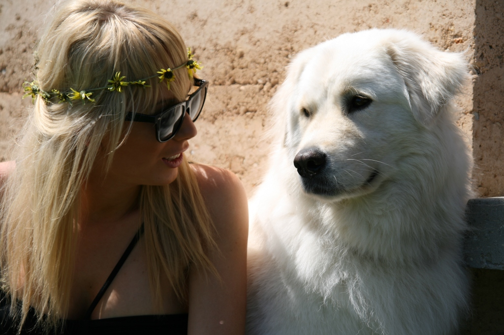Dog photography chat