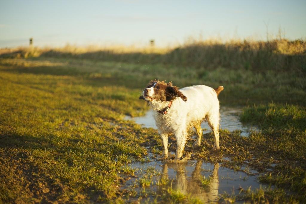 Dog photography puddle splash