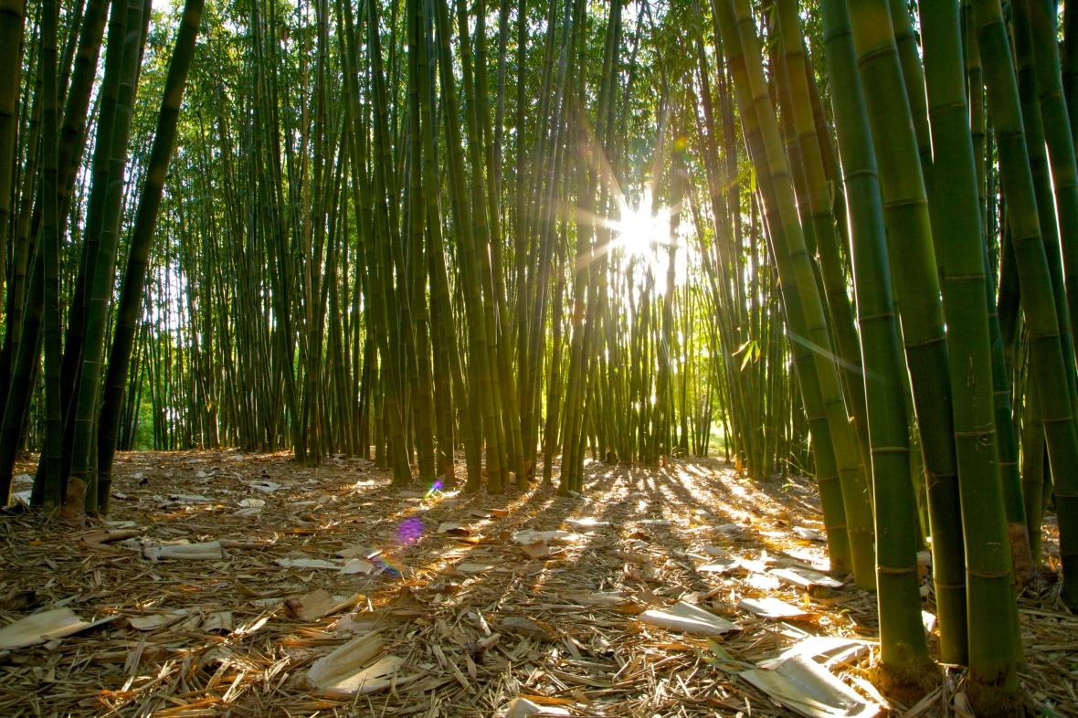 Secret bamboo